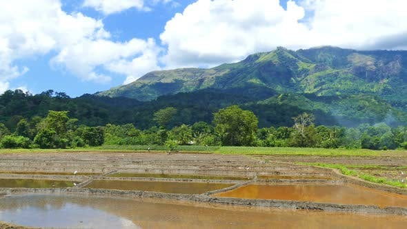 Thumbnail for Mountain Landscape  Rice Plantation In Sri Lanka 4