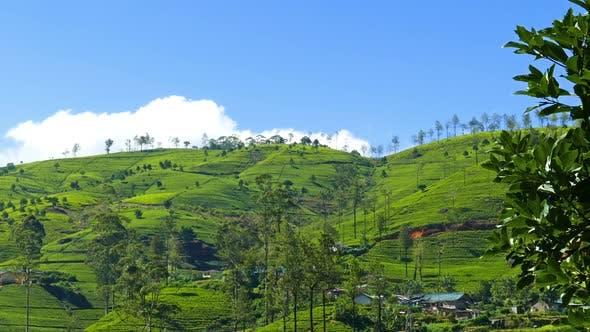 Thumbnail for Mountain Tea Plantation In Sri Lanka 7