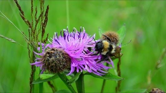 Thumbnail for Bumblebee 3