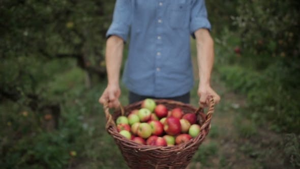 Thumbnail for Young Man With a Basket Full Of Apples