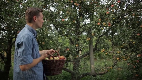Cover Image for Young Man Walking Across Apple Garden