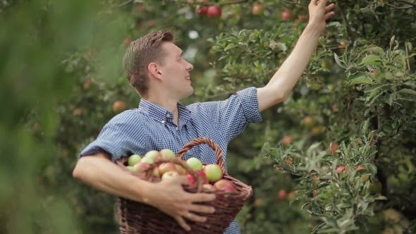 Thumbnail for junger mann mit ein korb voller äpfel