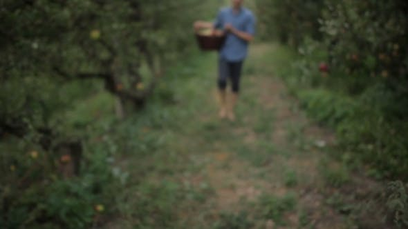 Cover Image for Young Man With a Basket Full Of Apples