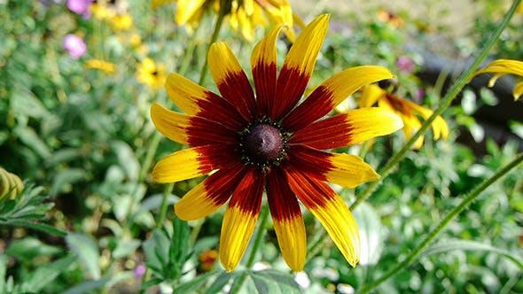 Thumbnail for Fading Summer Flower 1