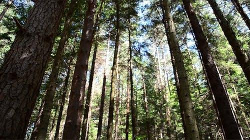 Pines 6