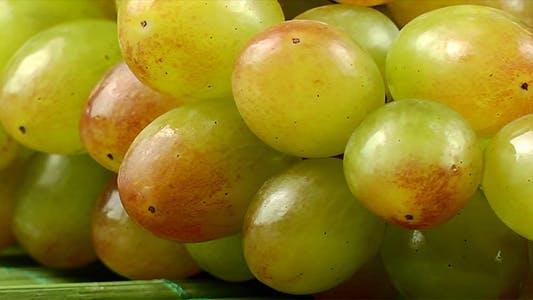 Thumbnail for Grape 3