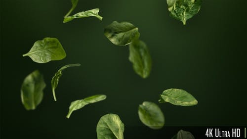 4K Handful of Healthy Green Spinach Leaves Tumbling Down Looping Background