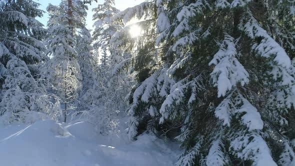 Thumbnail for Winter Forest Wonderland