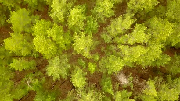 Thumbnail for Summer Green Forest From Above