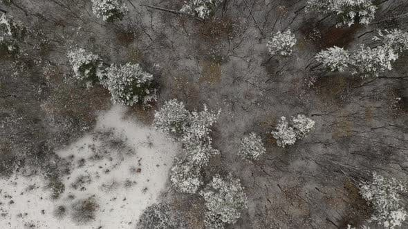 Thumbnail for First snow in the forest 4K drone footage