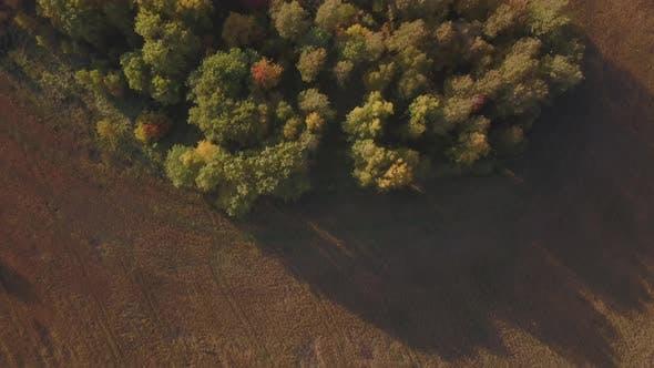 Thumbnail for Luftaufnahmen von goldenen Weizenfeldern vor der Ernte