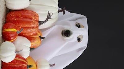 Funny Dog in Halloween Costume