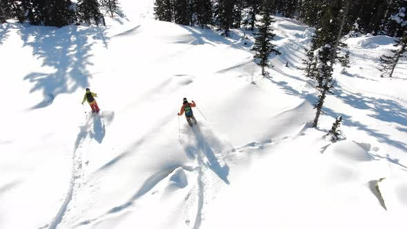 Skiers Train on High Unspoiled Track with Evergreen Trees