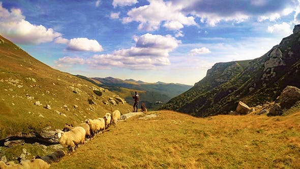 Thumbnail for Shepherd with Sheep in Mountain