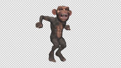 Monkey - Jumping - Wild Chimpanzee