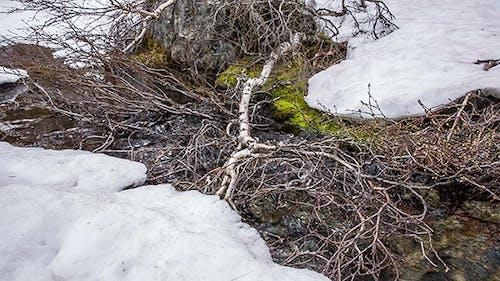 Stream From The Glacier