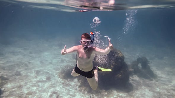 Cover Image for Snorkeler Diving