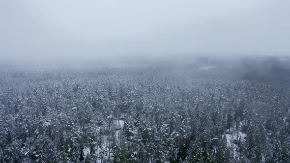 Thumbnail for Aerial Drone View in Mountain Forest. Winter Landscape. Fly Over Frozen Snowy Fir and Pine Trees