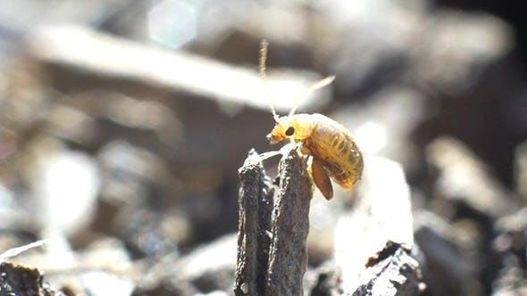 Thumbnail for Little Bug