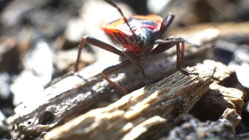 Firebug Bug
