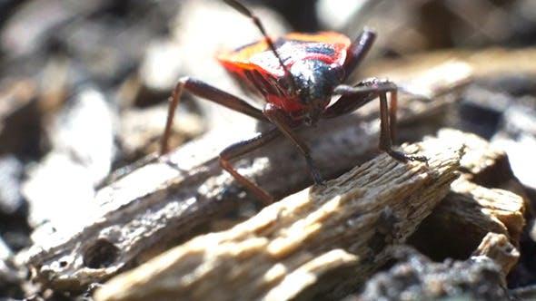 Thumbnail for Firebug Bug