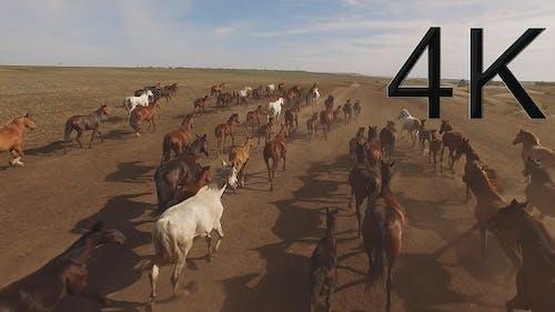 HA herd of Horses 2