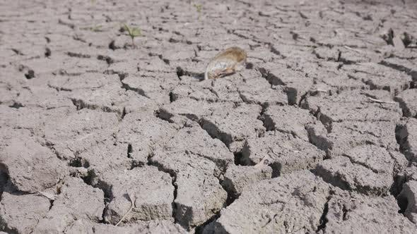 Thumbnail for Dry Fractured Soil of Drought on Lake, River or Sea Bottom