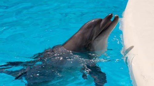 Cheerful Dolphins In The Dolphinarium