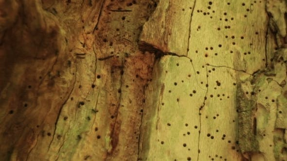 Thumbnail for Tree Bark Texture