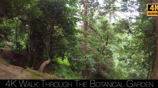 Walk Through The Botanical Garden