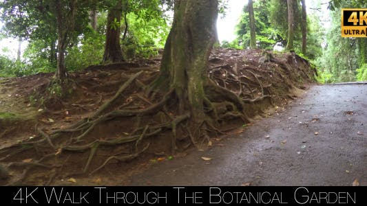 Thumbnail for Walk Through The Botanical Garden 2