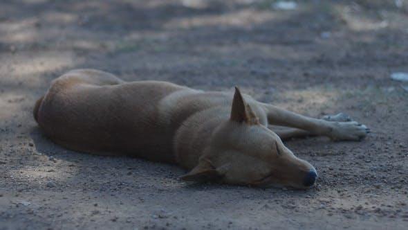 Thumbnail for Brown Dog Sleep