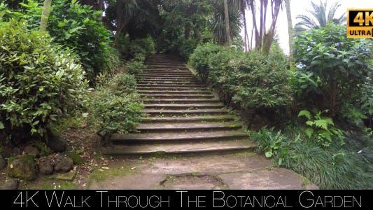 Thumbnail for Walk Through The Botanical Garden 8