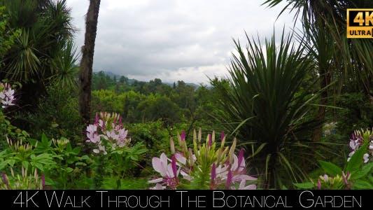 Cover Image for Walk Through The Botanical Garden 13