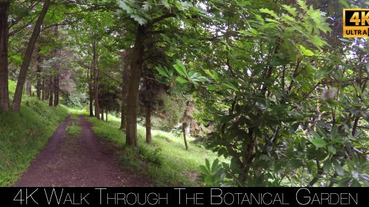 Thumbnail for Walk Through The Botanical Garden 15