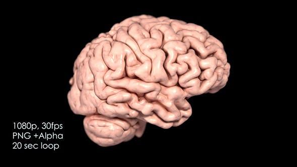 Realistic Human Brain Rotating