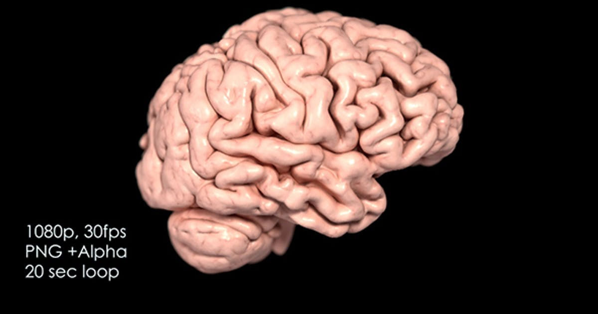 Realistic Human Brain Rotating By Red5five On Envato Elements