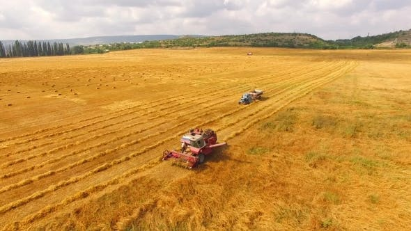 Thumbnail for Tractor Moving Towards Combine In Wheat Field