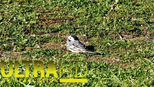 Thumbnail for Bird 1