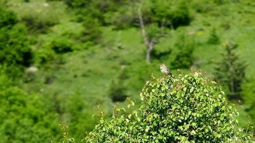 Chant Oiseau