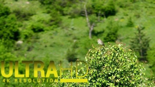 Thumbnail for Chant Oiseau