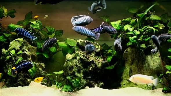 Thumbnail for Fish In Aquarium 12