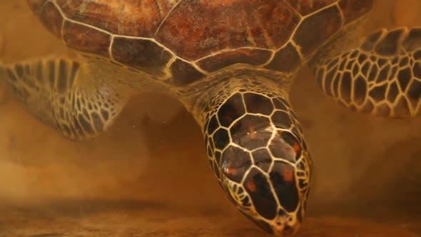 Thumbnail for Baby Turtles Swimming In Pool At Kosgoda Lagoon Turtle Hatchery 6