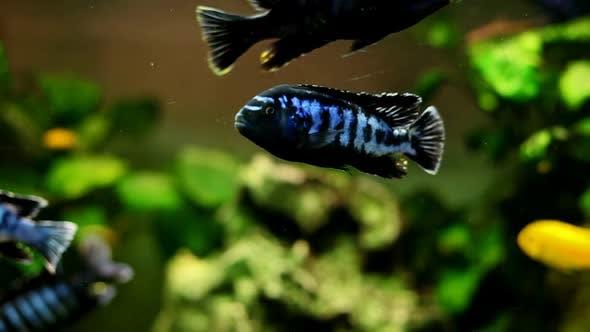 Thumbnail for Fish In Aquarium 14