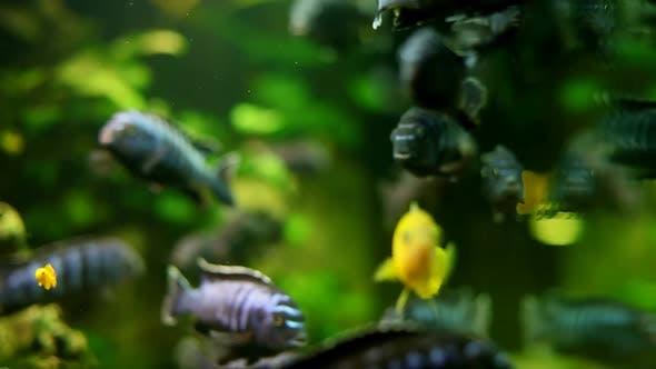 Thumbnail for Fish In Aquarium 15