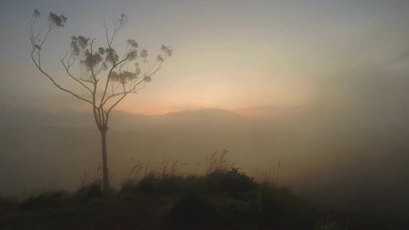 Thumbnail for Magical Sun Rising With Mist Passing Over Mountain And Tree Silhouette At Ella Peak, Sri Lanka.