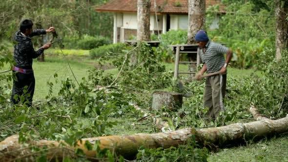 Thumbnail for Man Cutting Tree