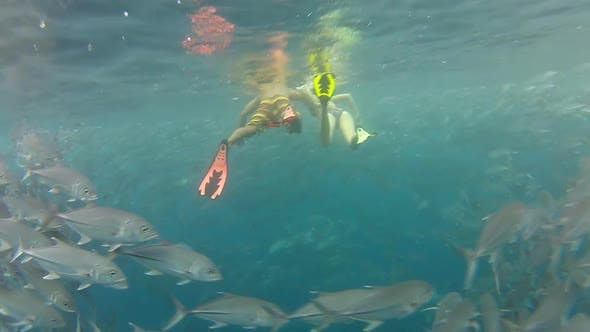 Thumbnail for Person Swimming Among Shoal Of Jack Fish In Tulemben In Bali, Indonesia 3