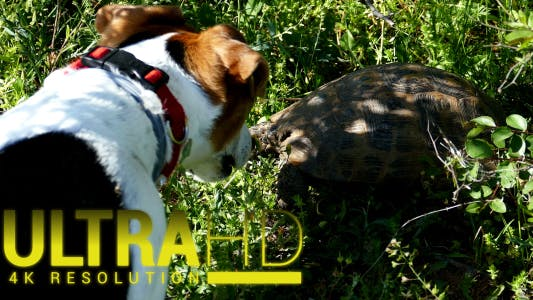 Thumbnail for Dog and Turtle
