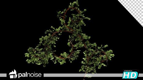 Thumbnail for Bush Ivy Growth
